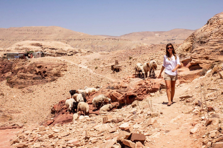 Carla caminando con las ovejas en Petra.