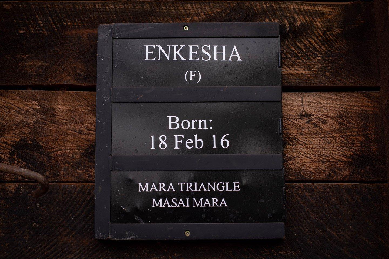 Enkesha, elefante adoptado en Nairobi.